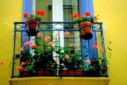 Flowers outside window